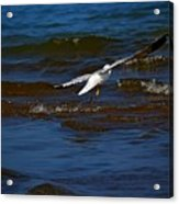 Fly Away Acrylic Print by Amanda Struz