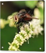 Fly Beauty Acrylic Print