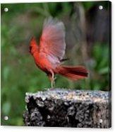 Fly Birds 318 Acrylic Print