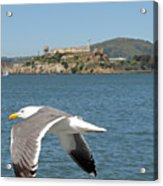 Fly By... Acrylic Print