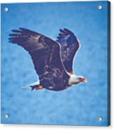 Fly By Eagle. 3 Of 3 Acrylic Print
