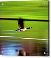 Fly-by Acrylic Print
