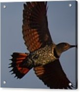 Fly Flicker Fly Acrylic Print