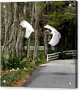 Fly Fly Away Acrylic Print
