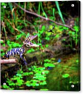 Fly Into My Mouth Please Acrylic Print