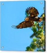 Fly Like An Eagle Acrylic Print