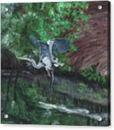 Fly Me Away To Little River Acrylic Print