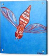 Fly South Acrylic Print