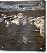 Flycatcher Hunting On The Buffalo River Acrylic Print