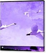 Flyers Acrylic Print