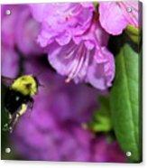 Flying Bee Collecting Pollen Acrylic Print