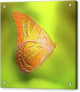 Flying Butterfly On Decorative Background, Graphic Design. Acrylic Print