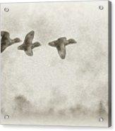 Flying Ducks Acrylic Print