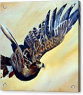 Flying Eagle Acrylic Print