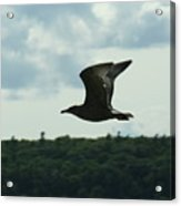 Flying Ephraim Wi Acrylic Print