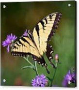 Flying Flowers Acrylic Print