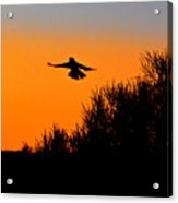 Flying Free In Northen Beaches Acrylic Print