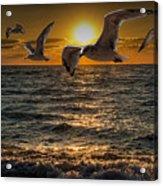 Flying Gulls At Sunset Acrylic Print