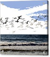 Flying Gulls Acrylic Print