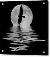 Flying Hawk 2 Acrylic Print