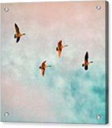 Flying Last Light Acrylic Print