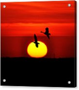 Flying North At Sunrise Acrylic Print