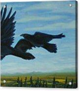 Flying Over The Tanana Flats Acrylic Print by Amy Reisland-Speer