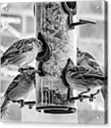 Flying Piglets Bw Acrylic Print