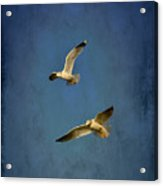 Flying Seagulls Acrylic Print