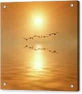 Flying South Acrylic Print
