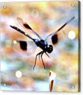 Flying Sparkler Acrylic Print