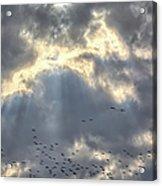 Flying Through Sun Rays 2 Acrylic Print