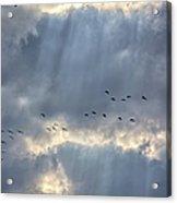 Flying Through Sun Rays 3 Acrylic Print