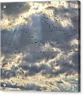 Flying Through Sun Rays Acrylic Print