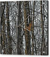 Flying Through The Trees Of The Forest Acrylic Print