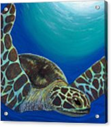 Flying Turtle Acrylic Print