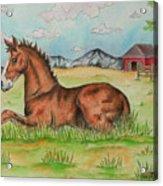 Foal In Grass Acrylic Print