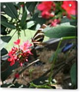 Focus In The Center - Black And White Butterfly Acrylic Print