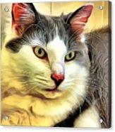 Focused Feline Acrylic Print