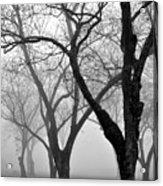 Fog 1 Acrylic Print by Beverly Hammond
