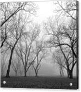 Fog 3 Acrylic Print by Beverly Hammond