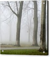 Fog Amongst The Trees Acrylic Print