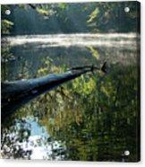 Fog And Reflection Of Stream Acrylic Print