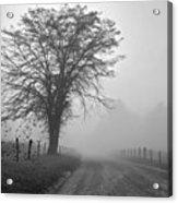 Fog Covered Lane Acrylic Print