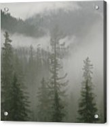 Fog Hangs In A Valley Of Evergreens Acrylic Print