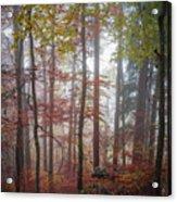 Fog In Autumn Forest Acrylic Print