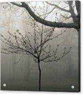 Fog In Shenandoah Acrylic Print