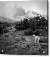 Fog In The Organ Mountains Acrylic Print