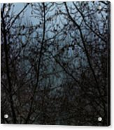 Fog In The Trees Acrylic Print
