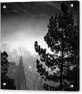 Fog In The Trees Acrylic Print